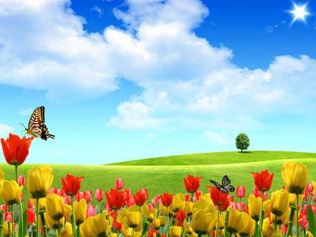 Тюльпаны и бабочки. Шаблон PowerPoint