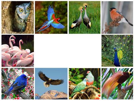 Шаблон PowerPoint Птицы