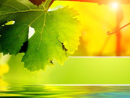 Кленовый лист. Шаблон для презентаций о природе