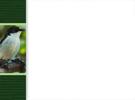 Слайд. Шаблон для презентаций о птицах