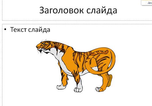 Тигр, смотрящий в левую сторону