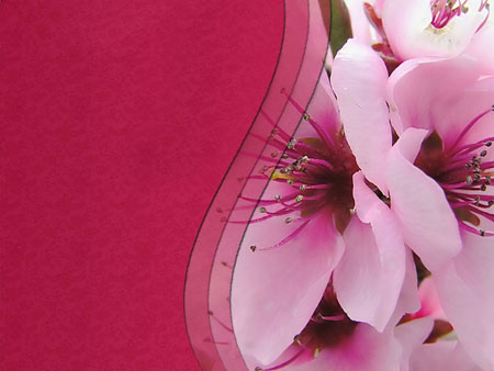 Весенний цветок. Шаблон для презентаций