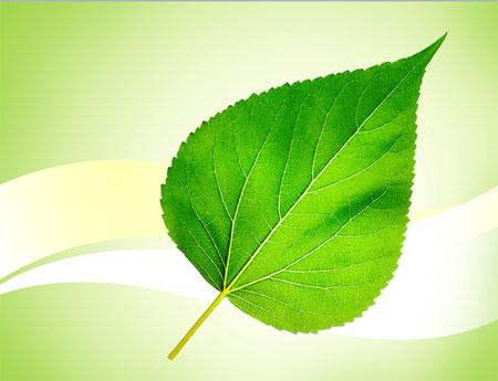 """Бесплатный шаблон """"Зеленый лист-2"""""""