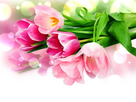 Букет тюльпанов. Поздравительный шаблон для презентаций