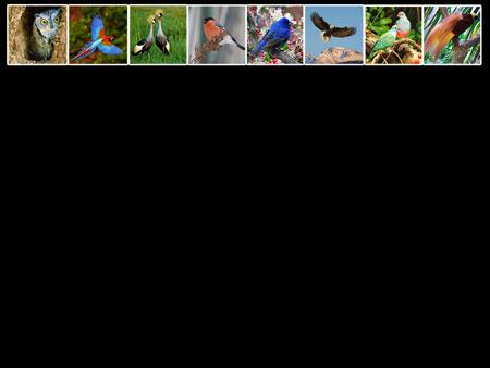 Птицы. Слайд PowerPoint
